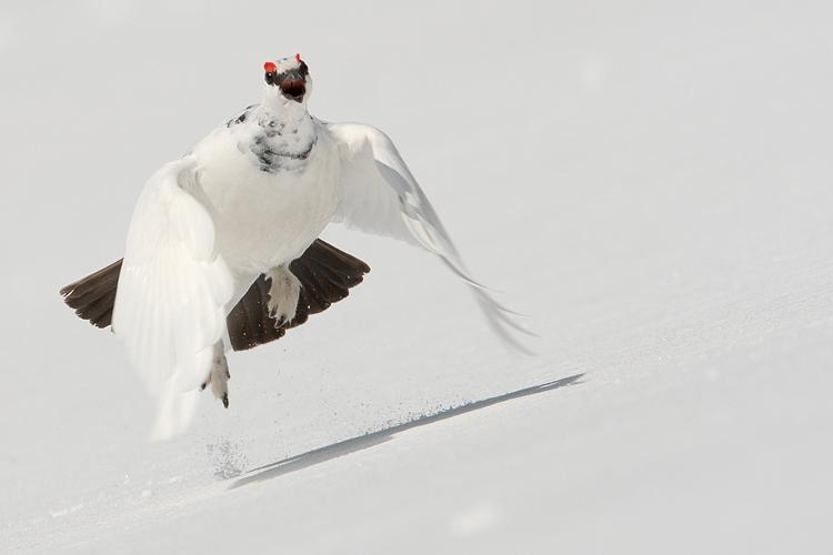 Il volo della regina delle nevi