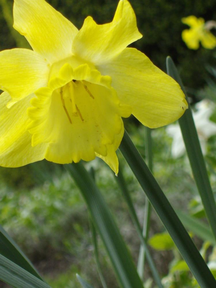 il y a des fleurs qui n'ont pas de senteur hormis celle du bonheur