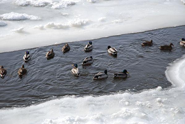 Iles des moulins février 2007