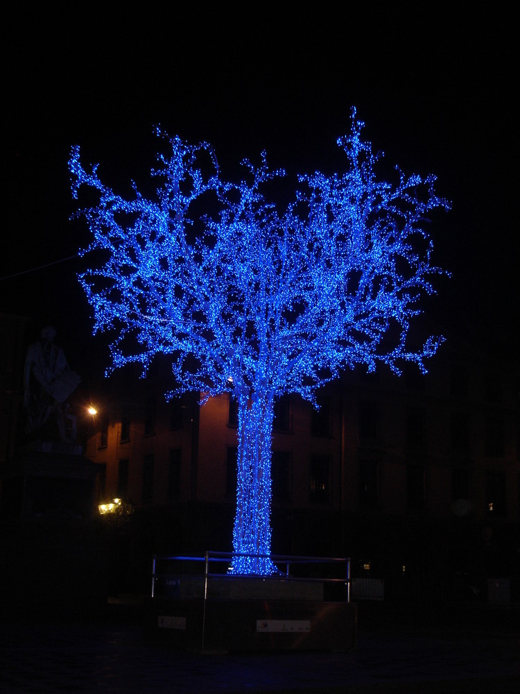 illumination d' arbre