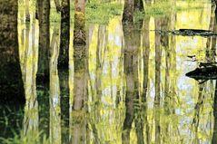Illwald - Hochwasser III