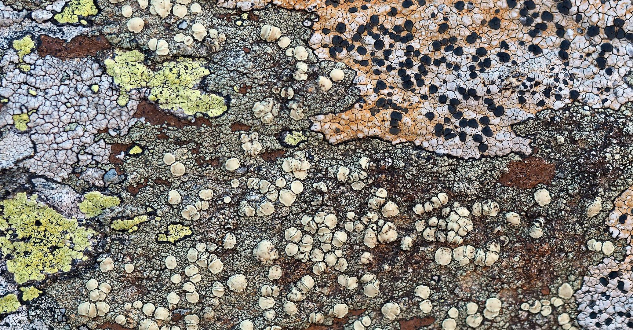 Im abgelegenen und stillen Tal fühlen sich die Flechten wohl..! - Des lichens de la haute montagne.