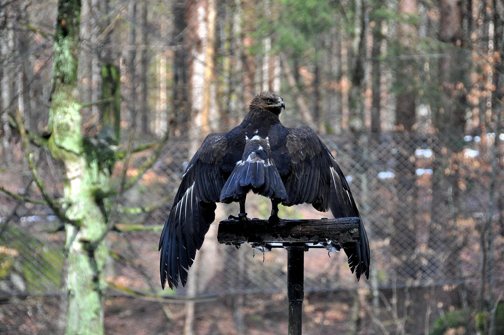 Im ältesten Nationalpark Deutschlands 6