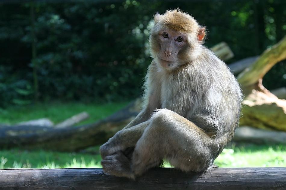 Im Affenwald