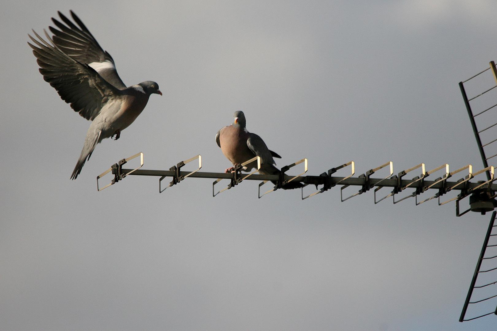 Im anflug zur Landung