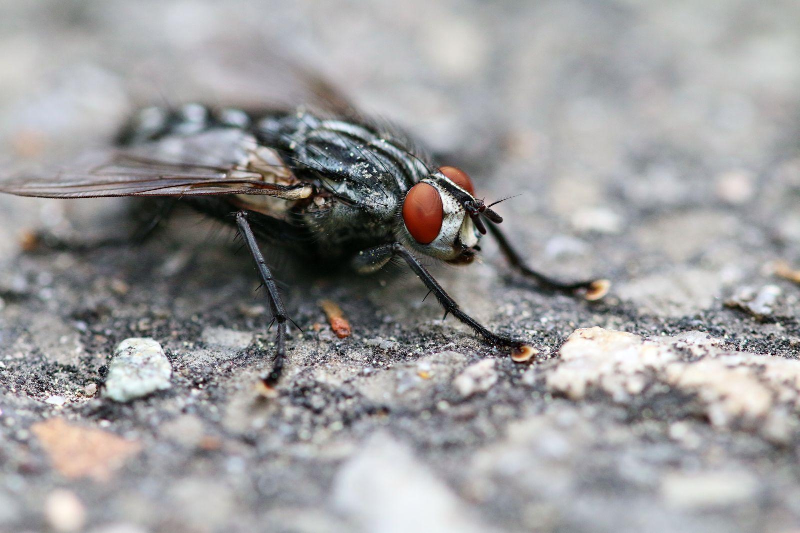 Im Angesicht der Fliege