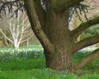 Im Arboretum Ellerhoop