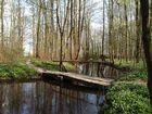 Im Auenwald-2