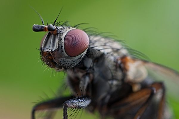 Im Auge der Fliege