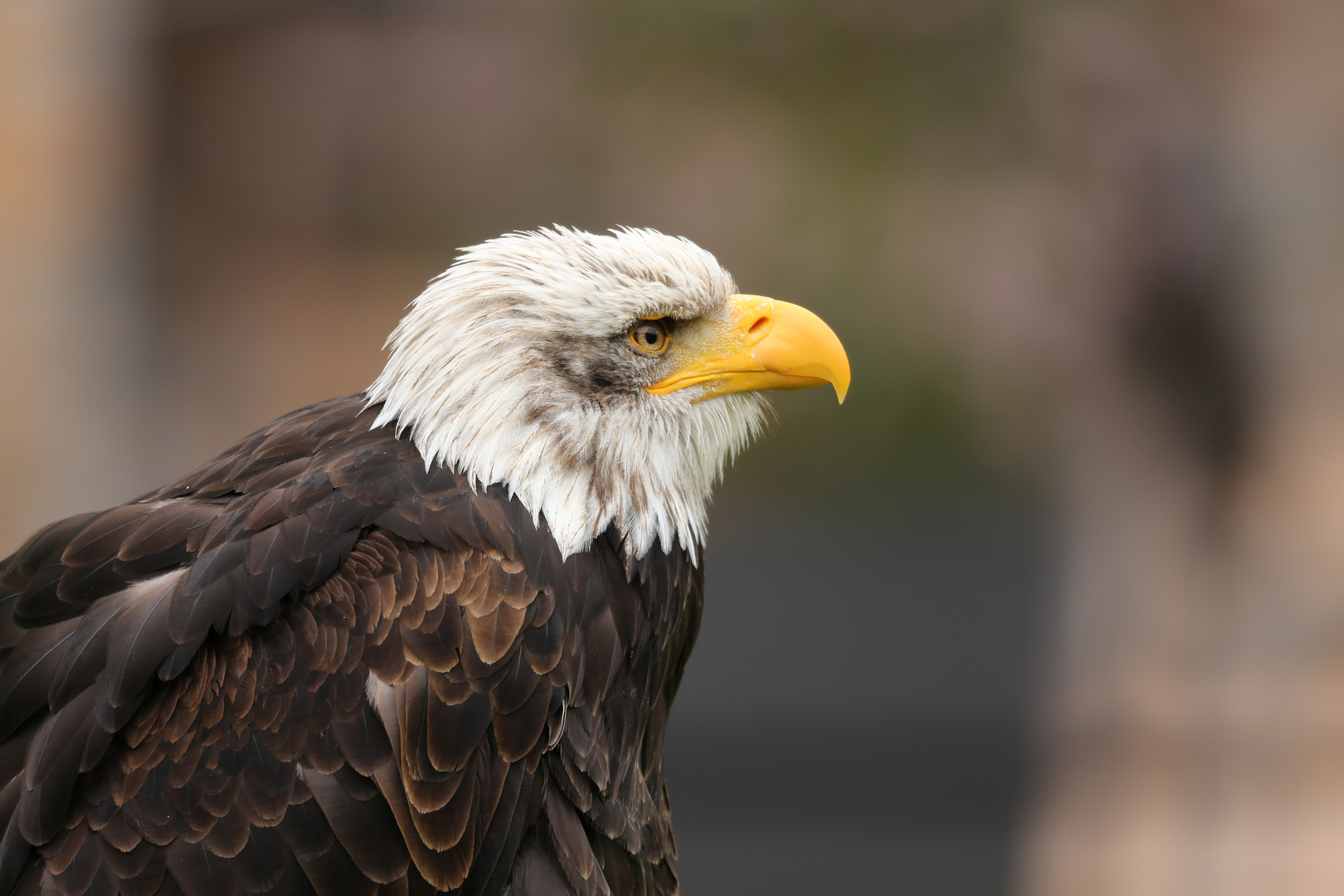 Im Auge des Adlers