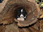 im Auge des Baumes