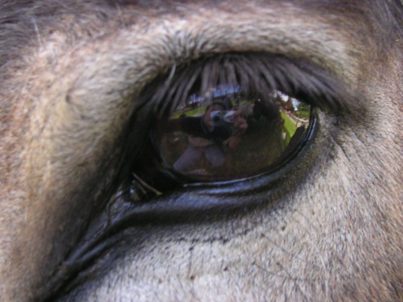 Im Auge des Esels