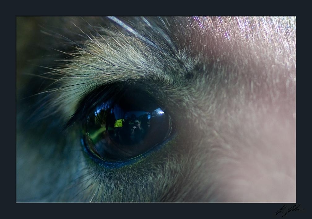 Im Auge des Kängurus