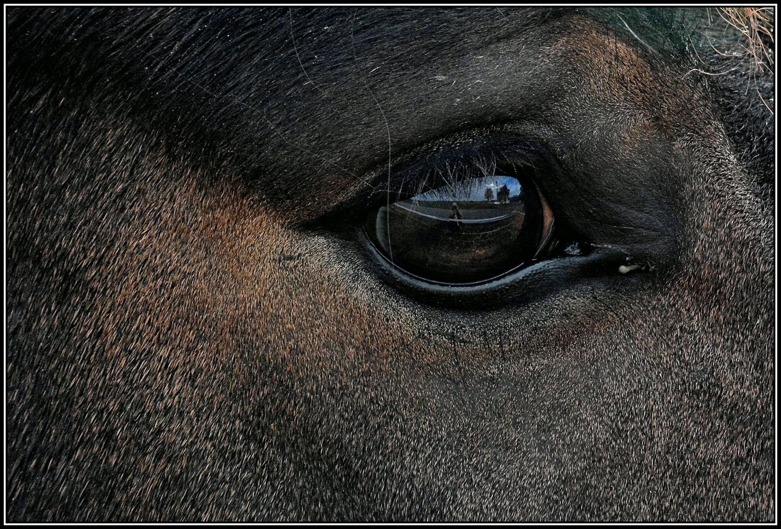 Im Auge des Pferdes ...