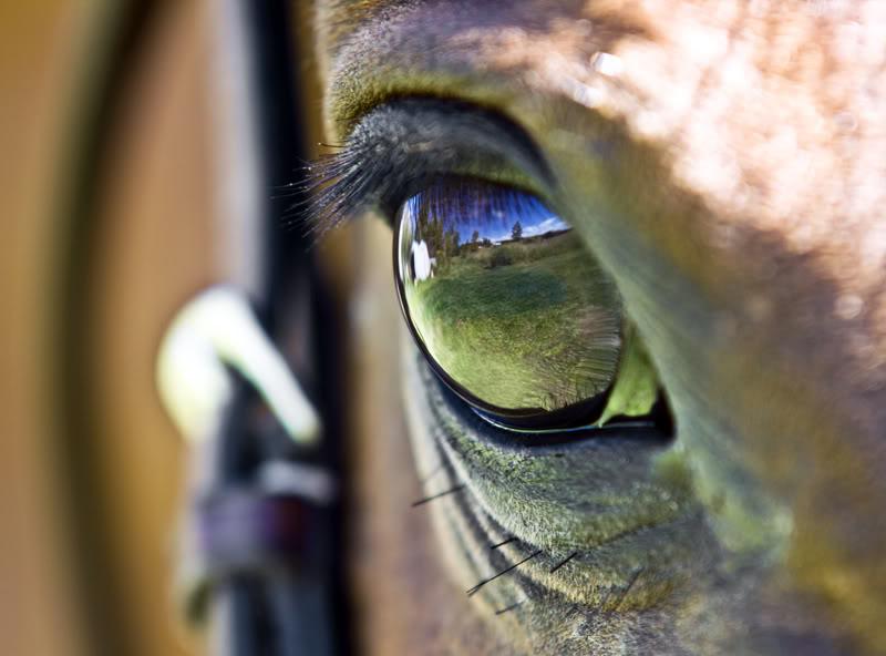 ...Im Auge des Pferdes...
