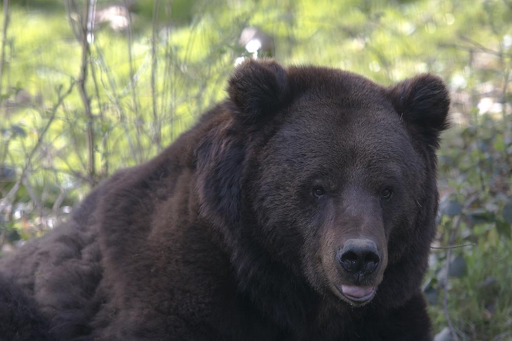 Im Bärenpark