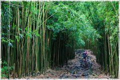Im Bambuswald von Maui