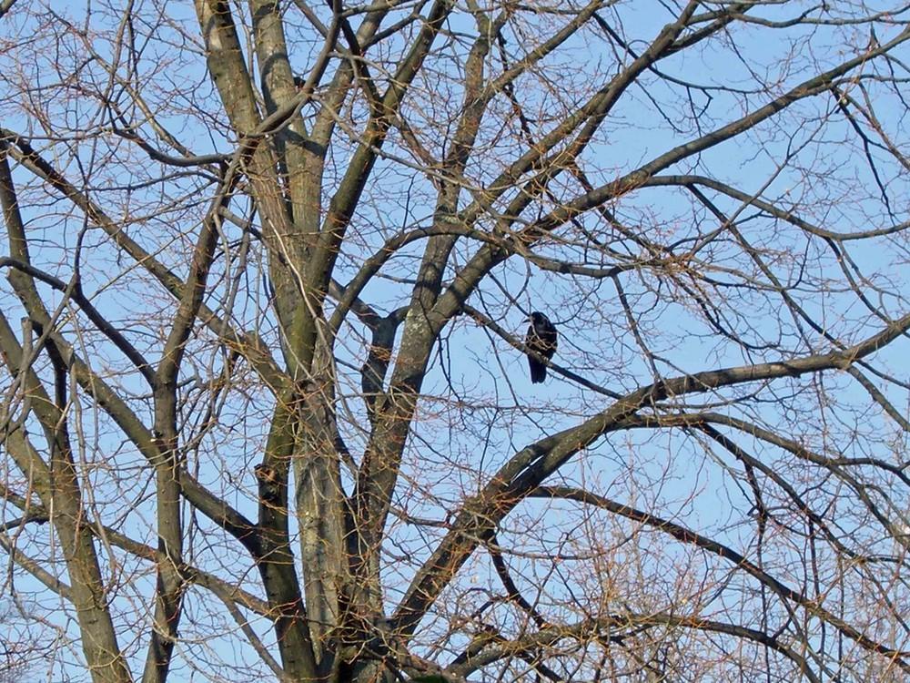 Im Baum alleine...