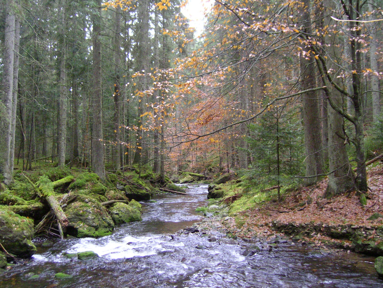Im Bayerischen Wald