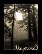 Im Bayrischen Wald