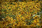 Im Berggarten (6) Blütenmeer