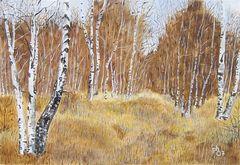 Im Birkenwald (Hernstedter Moor)