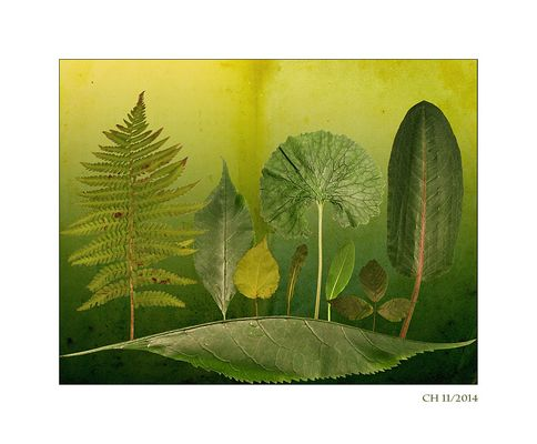 Im Blätterwald 2