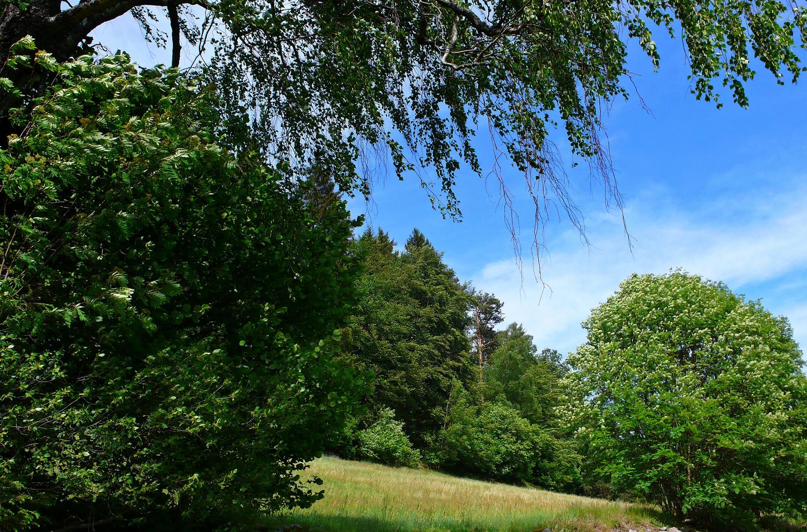 Im Blätterwald