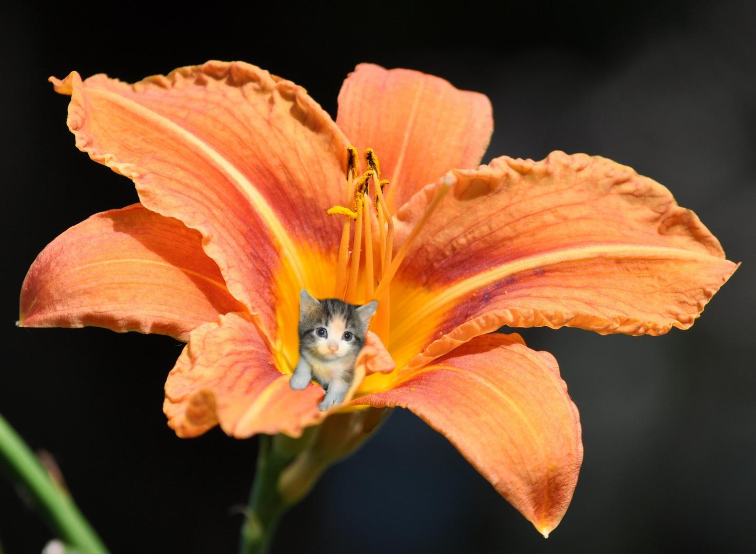 Im Blütenstaub