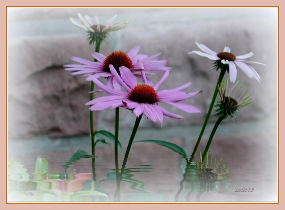 Im Blumenhimmel ...
