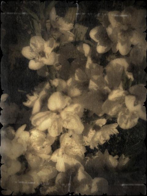 Im Blumenladen