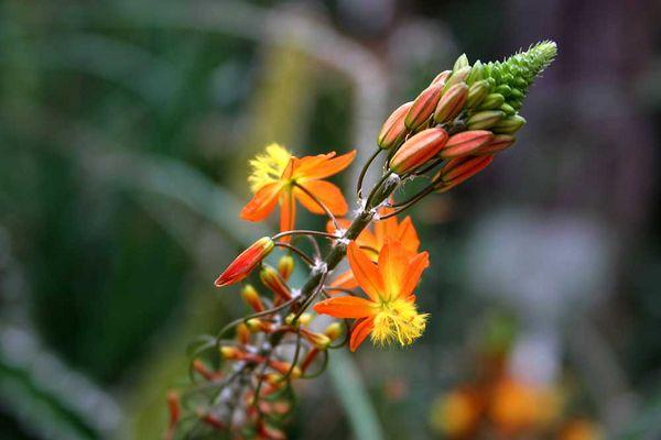 Im botanischen Garten II