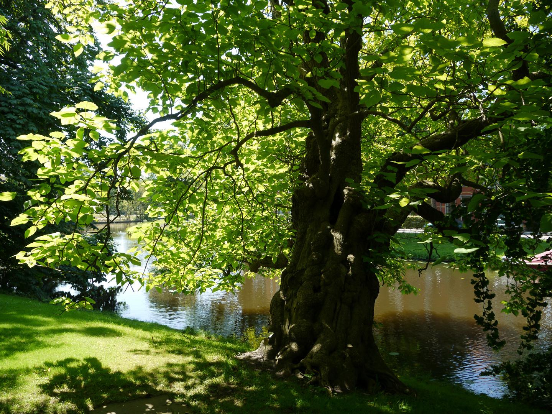 Im Botanischen Garten in Leiden in Holland....