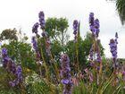 Im Botanischen Garten in Roscoff , Bretagne