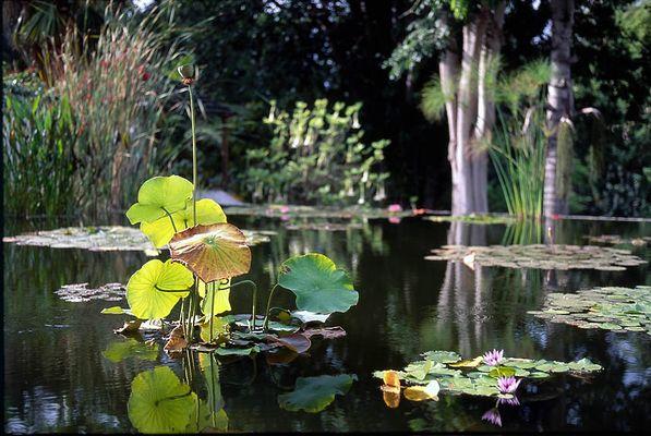 Im Botanischen Garten Puerto de la Cruz