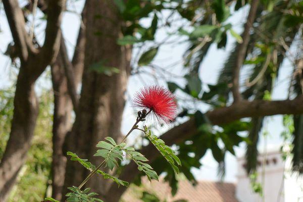 Im Botanischen Garten von Puerto de La Cruz, Teneriffa