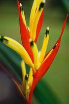 Im botanischen Garten von Singapur
