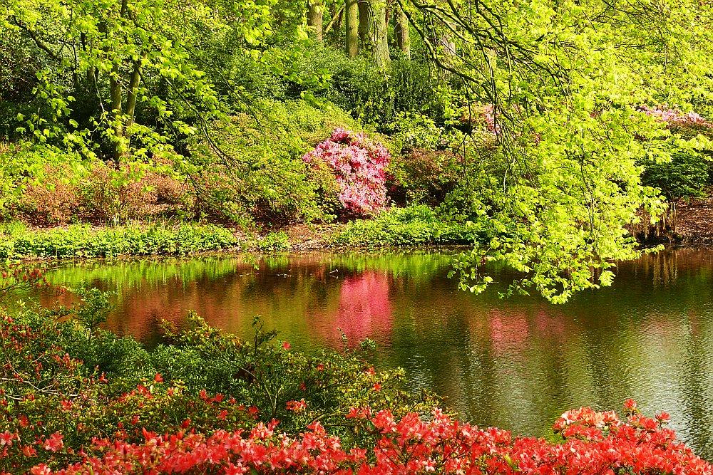 Im Bremer Rhododendron-Park