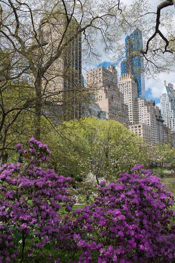 Im Central Park#1