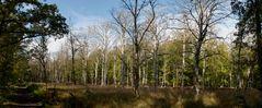 Im Darßer Wald