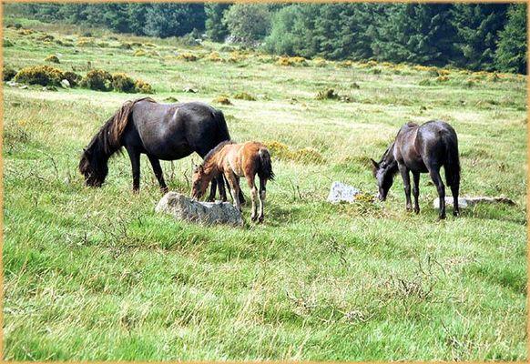 Im Dartmoor (Südwestengland)