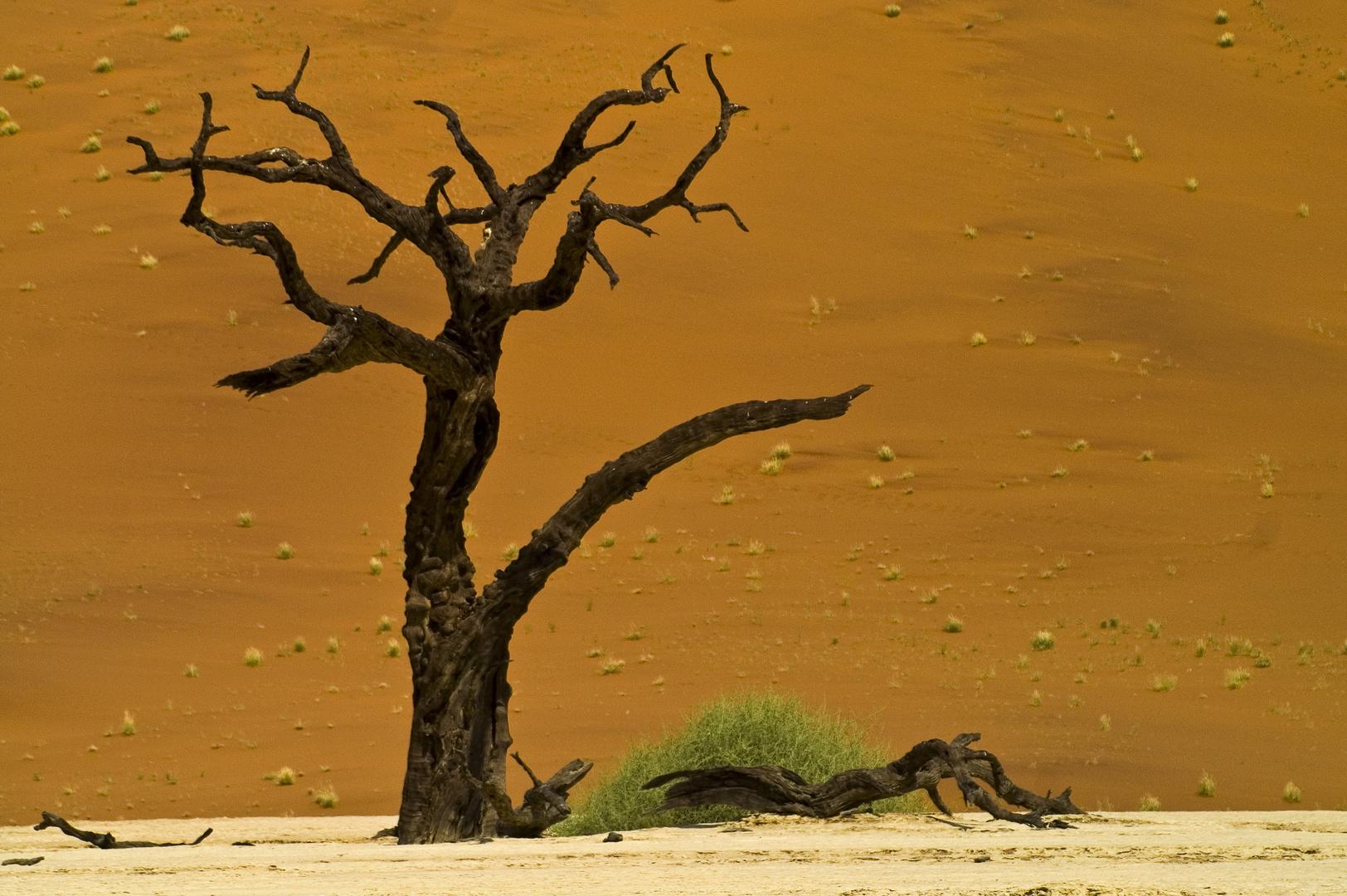 Im Dead Vlei (Namib) 3