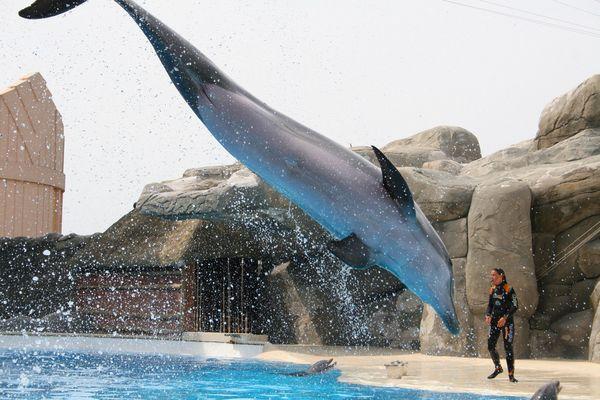 im Delphinarium im Gardaland