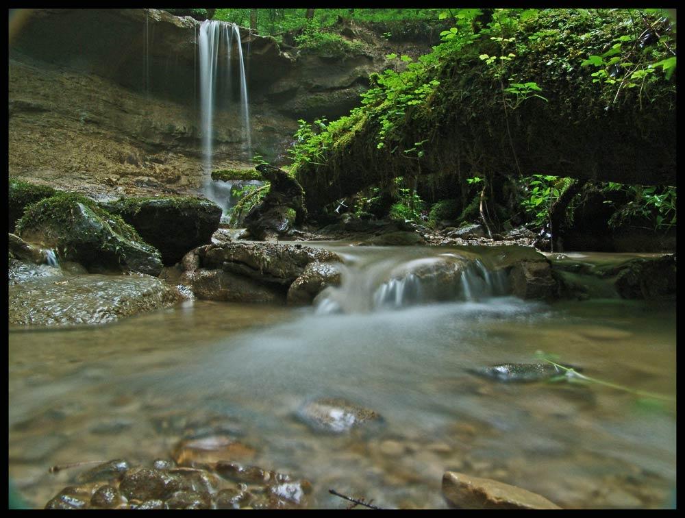 Im dichten, nassen Wald
