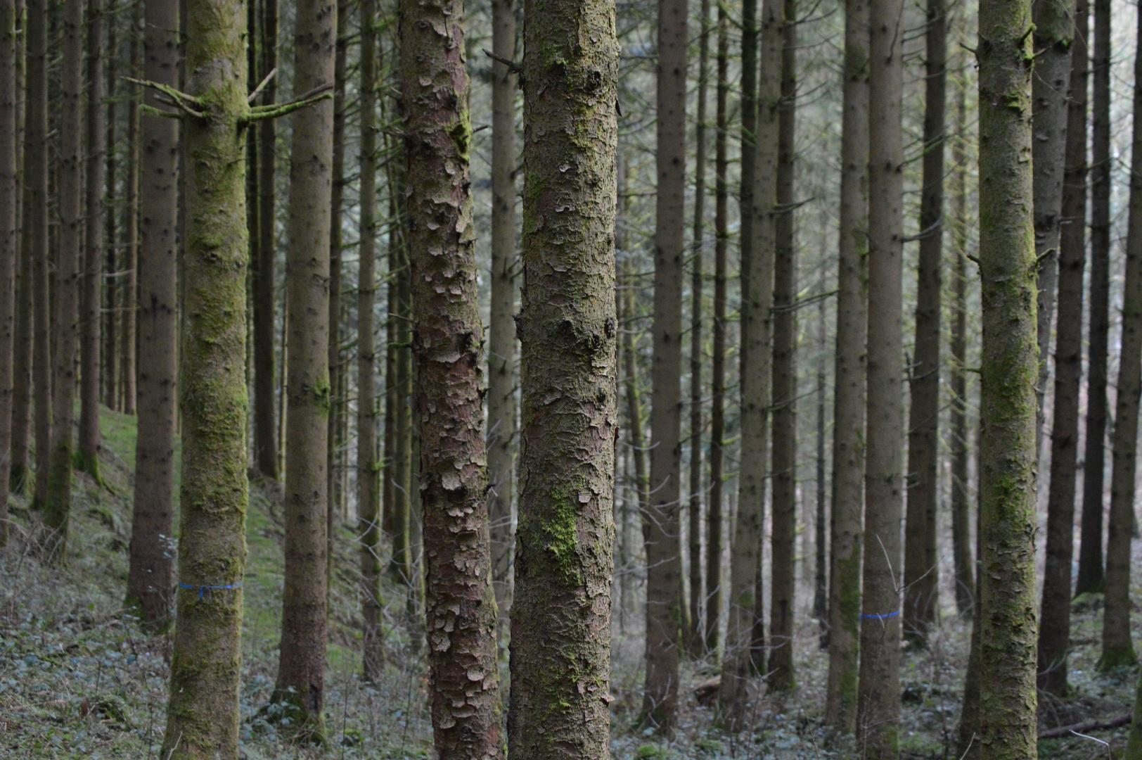 Im dichten Wald