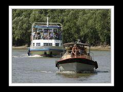 Im Donaudelta 05