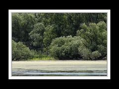 Im Donaudelta 13