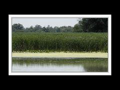 Im Donaudelta 16
