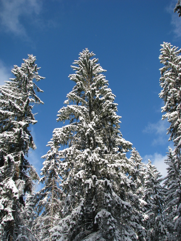 I´m dreaming of a white Christmas
