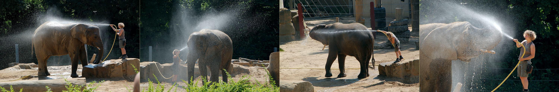 Im Dresdner Zoo...